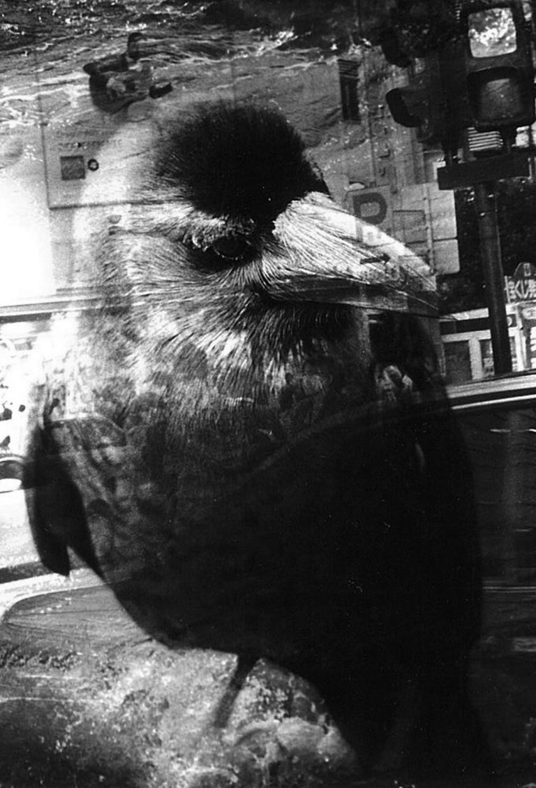 WARNING #26  – Kosuke, Photography, Art, Abstract, Black and White, Bird, Street For Sale 2