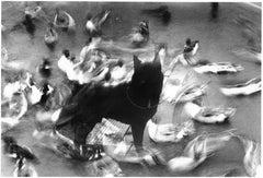 WARNING #01  – Kosuke, Photography, Art, Black and White, Dog, Birds, Animals