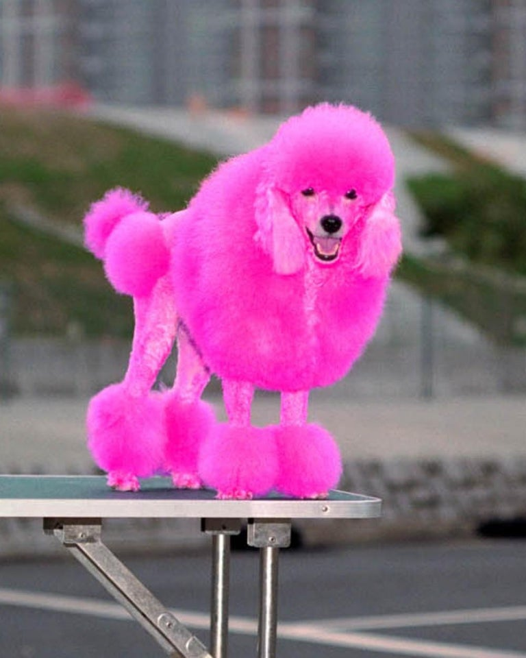 back door 48 – Michael Wolf, Cityscape, Hongkong, Street Photography, Pink dog For Sale 3