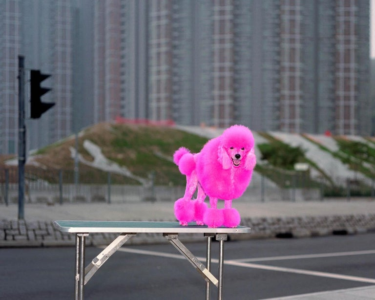 back door 48 – Michael Wolf, Cityscape, Hongkong, Street Photography, Pink dog For Sale 2