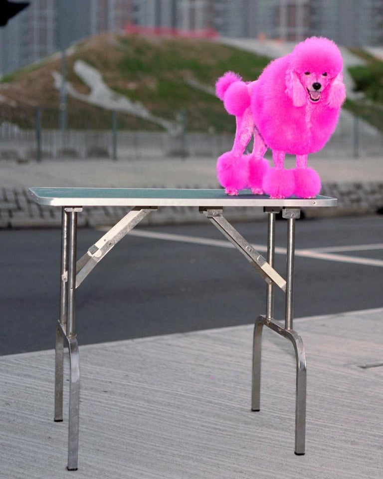 back door 48 – Michael Wolf, Cityscape, Hongkong, Street Photography, Pink dog For Sale 4