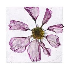 Flowers Unknown 10 – Brigitte Lustenberger, Flower, Still Life, Art, Flora