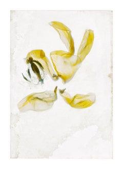 Flowers Unknown 16 – Brigitte Lustenberger, Flower, Still Life, Art, Flora