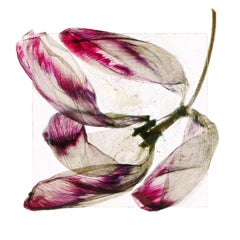 Will blow away tomorrow – Brigitte Lustenberger, Flower, Still Life, Art, Flora