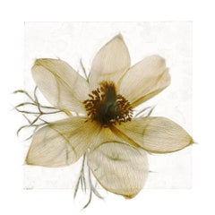 Unless it does not have to end – Brigitte Lustenberger, Flower, Still Life