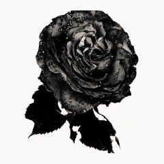 Black Rose – Nick Knight, Photography, Back, Rose, Flower, Black and White, Art