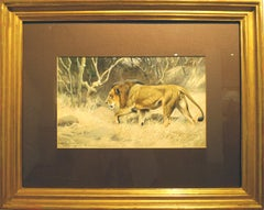 """""""Lion on the move"""",  19th Century watercolour by German painter Wilhelm Kuhnert"""