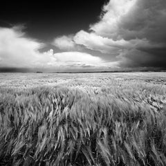 Windy - Square black and white photography,Limited edition print,Field in France