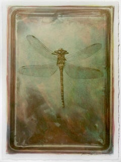 'Dragonfly' - Gum Bichromate,Watercolour,still life,20th. Century,color,one off