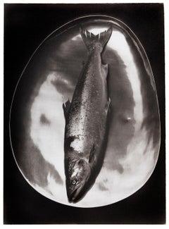 'Salmon'  Platinum Palladium print on vellum over silver- 20th. Century,archival