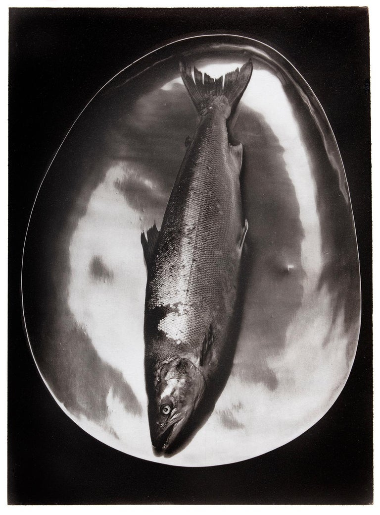 Ian Sanderson Black and White Photograph - Salmon - Platinum Palladium print on vellum over silver, limited edition, 1985