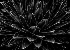 Cactus - Signed limited edition fine art print,Black and white photo,Analog