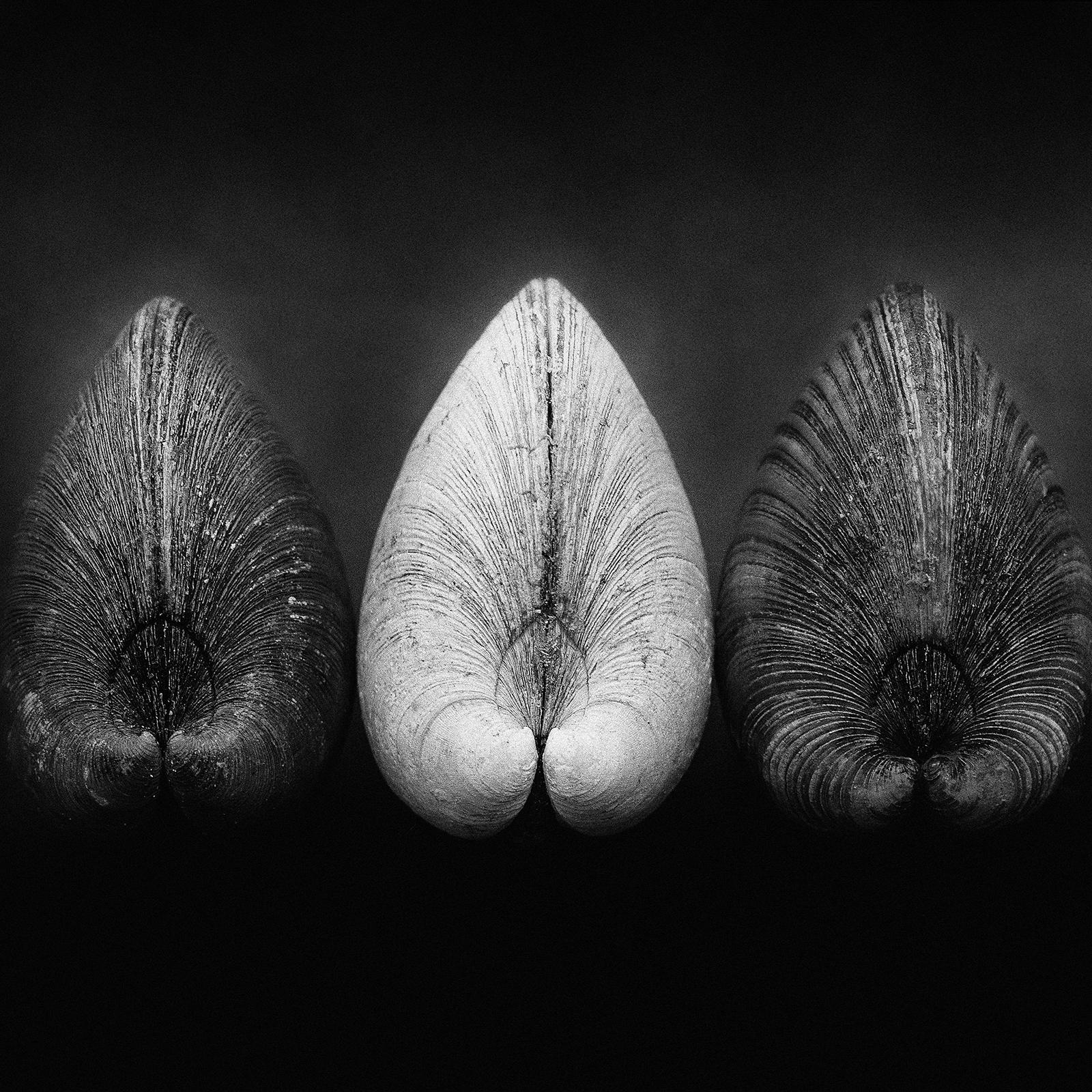 Clams-Signed limited edition fine art print,Black and white Photo, Analog,Square