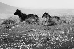 'Cavallini 02'- Signed limited edition print,Black and white, wild horse