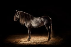 ' Horse 1 '- Signed limited edition archival pigment print, Edition of 5