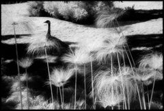 Huntington Gardens XXXII - Black and White Landscape Photography w/ Bird