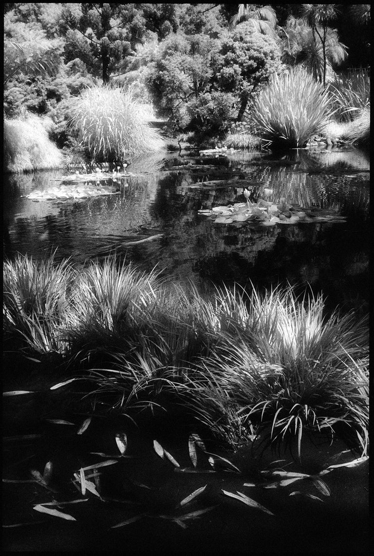 Edward Alfano Black and White Photograph - Huntington Gardens XII - Black and White Landscape Photography of Pond & Plants