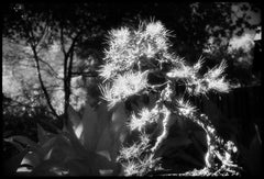 Huntington Gardens XXXVI - Black and White Landscape Photography of Cactus