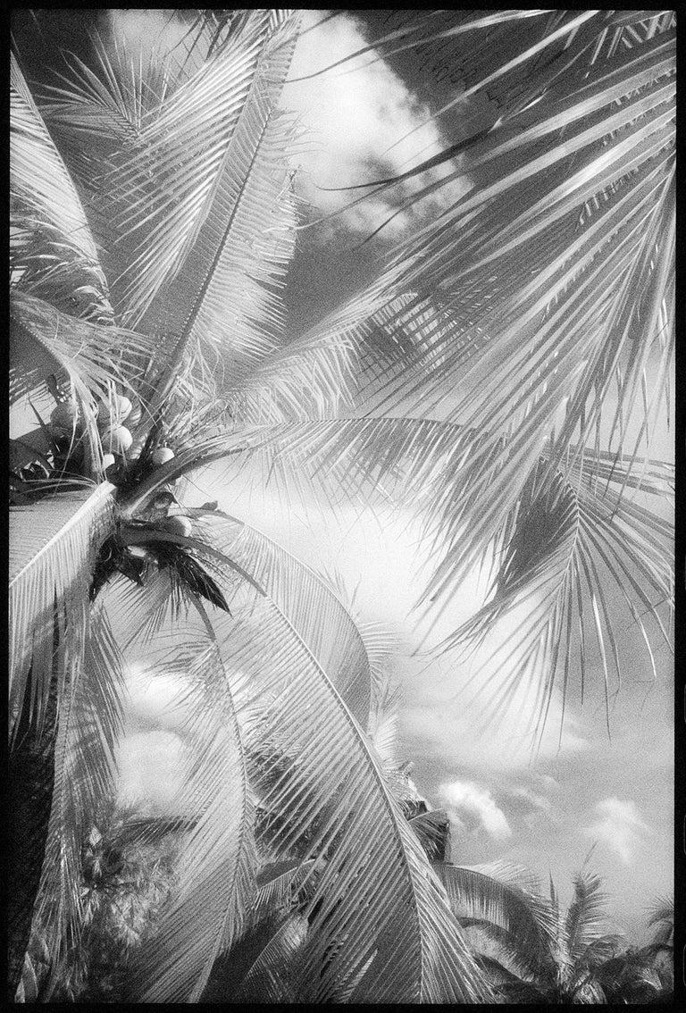 Edward Alfano Black and White Photograph - Lumphini Park - Infrared Photograph on Double Sided Aluminum