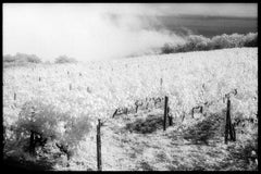 Vigneto Gambino, Taormina, Sicilia - Black & White Landscape of Italian Vineyard