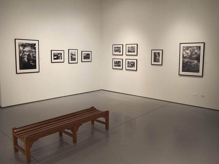 Huntington Gardens XII - Black and White Landscape Photography of Pond & Plants For Sale 1