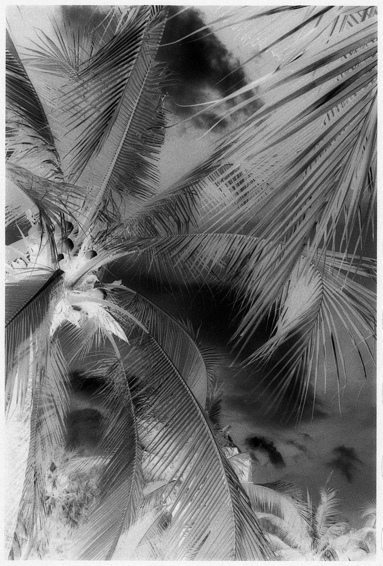 Lumphini Park - Infrared Photograph on Double Sided Aluminum - Gray Black and White Photograph by Edward Alfano