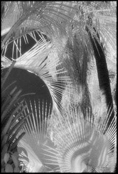 Huntington Gardens LII - Black and White Photography of Palms and Plants