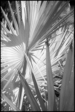 Huntington Gardens XLVI - Black and White Photography of Palms and Plants