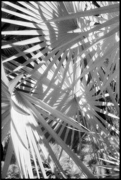 Huntington Gardens XLIV - Black and White Photography of Palms and Plants