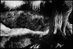 Juniper, Bend Oregon- Black and White Landscape Pondscape Photograph