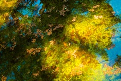 Reflection No. 4- Abstract Landscape Photograph of Pond / Trees in Yellow+ Green
