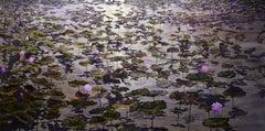 """""""Clair de Lune"""", Robert Fobear, Oil on Linen, Pond, Lily pads, Flower,"""
