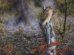 """Young Vigilant"", Robert Fobear, Oil on Canvas, Wildlife, Forest, Bird, Hawk"