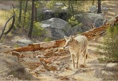 """Deadwood Prowler"", Rob MacIntosh, Realism, Animal, Forest, Wildlife, Wolf"