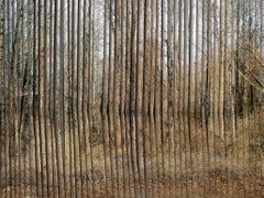 Brick & Mortar 2 - Digital composite of trees layered on textured wooden fence