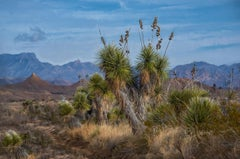 Yucca, Old Maverick - West Texas Hill Country landscape with mountains and sky