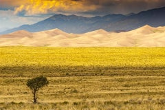 Untitled 9382 - Yellow landscape with golden sand dunes, mountains, & tall grass