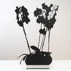 Purple Moth Orchid - Floral black shadow flower bouquet plant sculpture, nature
