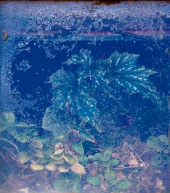 Lacey Leaf - Underwater blue & green nature landscape w/ textured leaves