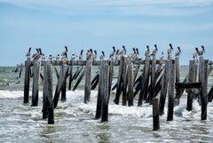 The Pelican Bar - Pelican birds perched at beach shoreline ocean waves landscape