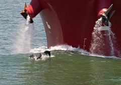 At Play Dolphins - Dolphins near red boat in Houston Ship Channel, green waves