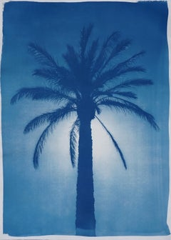 Cairo Citadel Palm, Cyanotype on Watercolor Paper, 100x70cm, Desert, Tropical