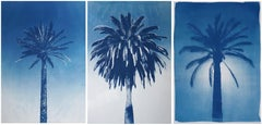 Triptych, Desert Palm Trio, Multipanel Cyanotype on Watercolor Paper, 100x210cm