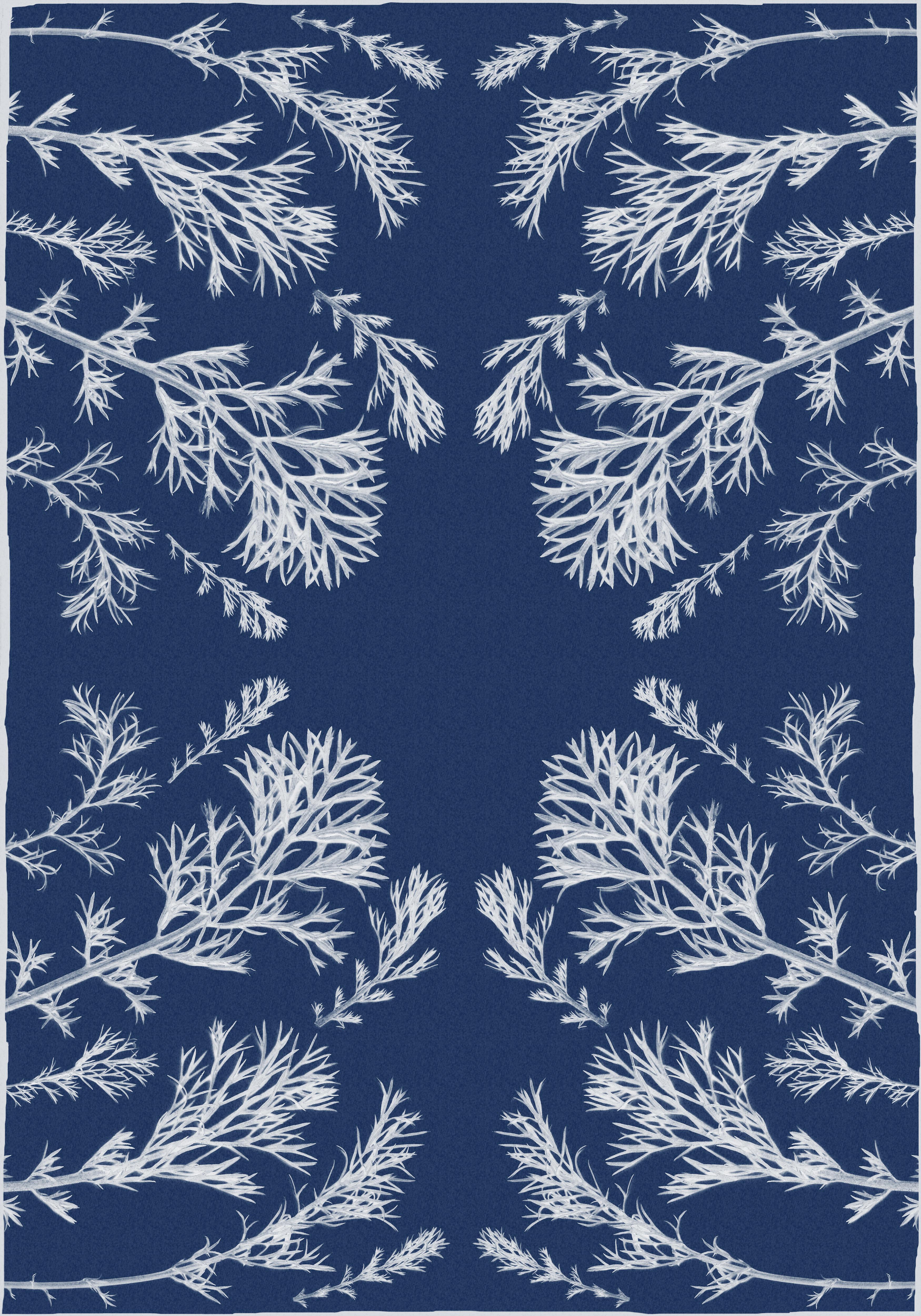 Classic Botanical Cyanotype, Handmade Using Natural Sunlight, Limited Edition