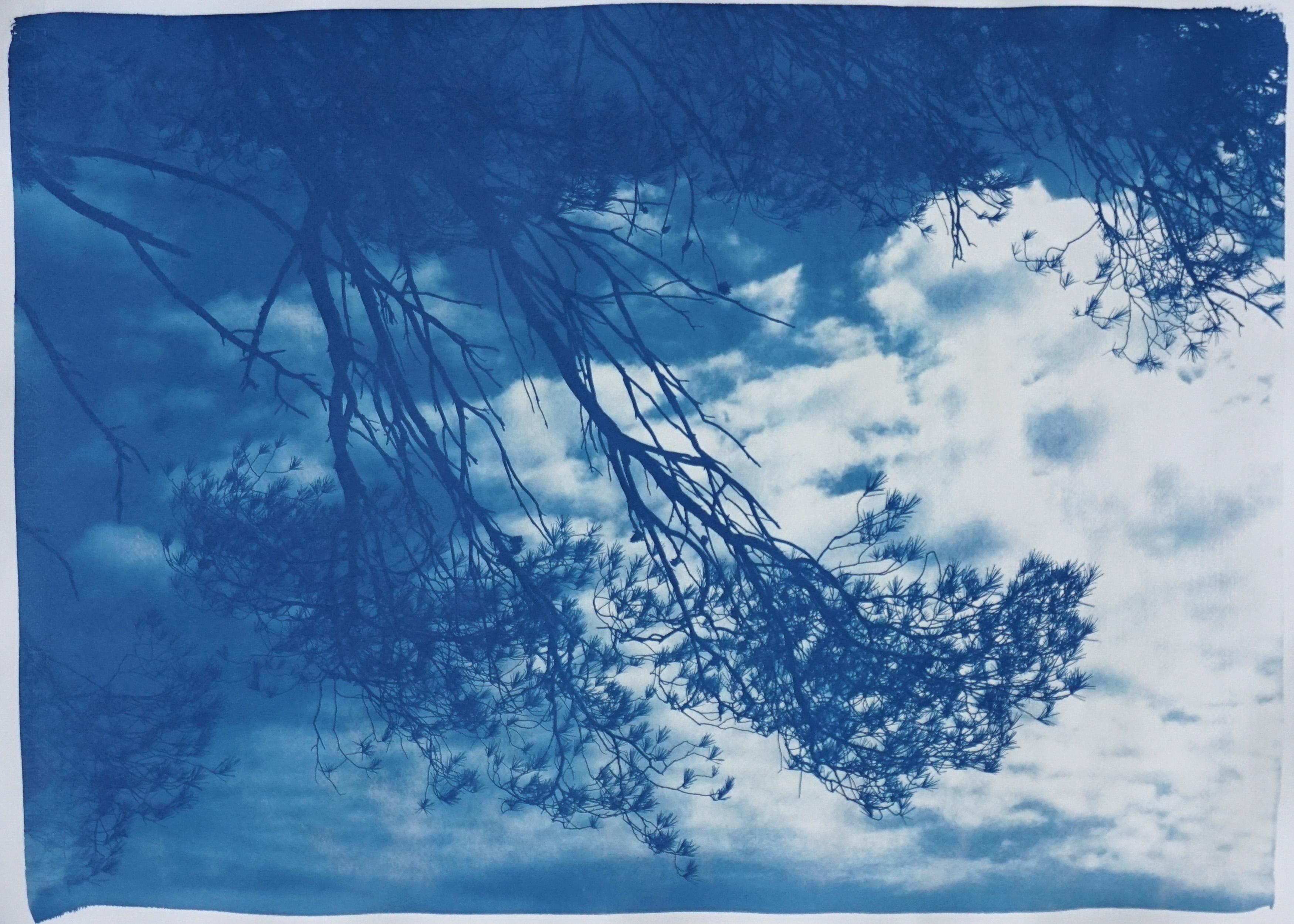 Malibu Pine Sea View, Limited Edition Cyanotype, California Landscape, Blueprint