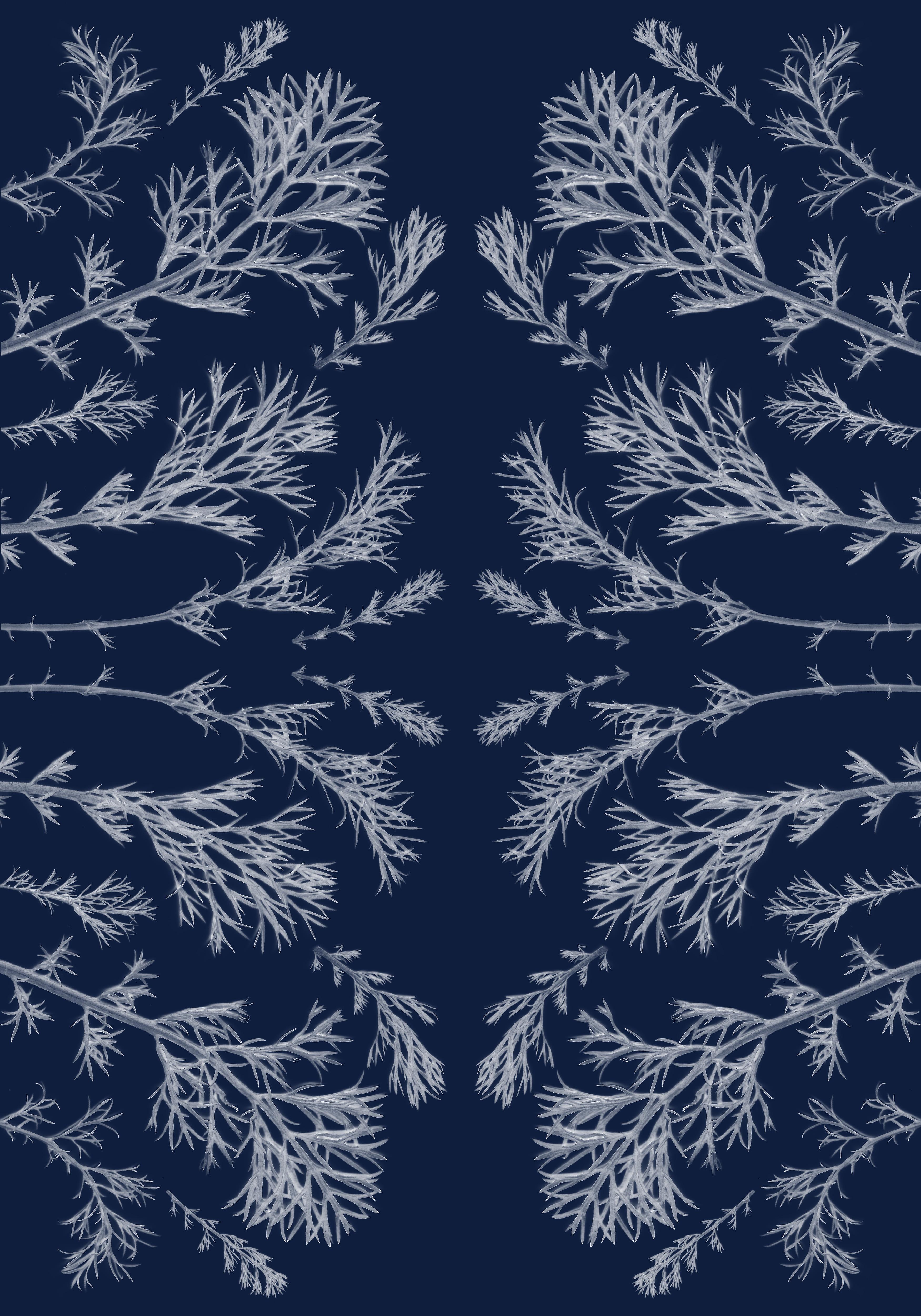 Plant pressed Cyanotype, Kaleidoscopic, Handmade in Sunlight, Limited Edition
