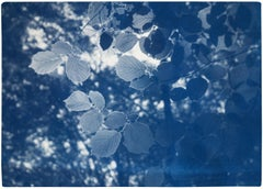 Sunbeam on Forest Leaves, Blue Tones Cyanotype Landscape, Paper, Limited Edition