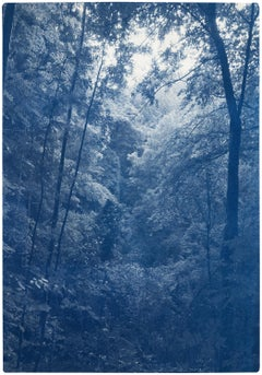 Soft Light in the Woods, Forest Landscape, Blue Tones, Handmade Cyanotype Print