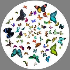 Butterflies   70 in x 70 in