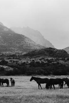 Horse photography, Black & White Horse Photography, Horses: Black and Equwhite